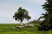 Schafherde auf der Weide von Margarita Moerth