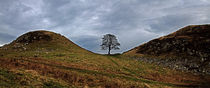 Sycamore Gap Panorama von David Pringle