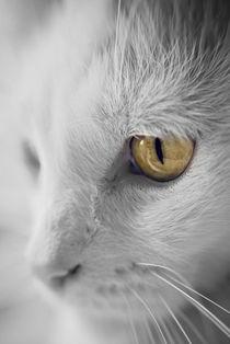 Feline Portraits. von rosanna zavanaiu