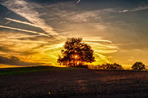 Sonnuntergang (Sunset) in Rodenberg, Niedersachsen by Oliver Frohnert