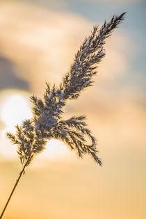 In der Abendsonne von Denis Kramer