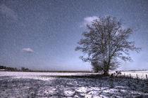 Tree in the Snow  von Rob Hawkins