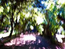 Boboli Gardens by Alev Takil