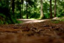 Hiking by Alvaro Chahin