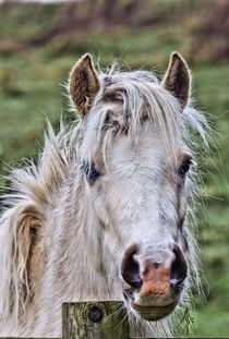 Pony-filtered