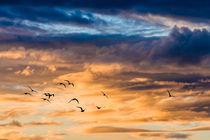 bird.sunset von Arno Kohlem