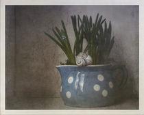 spring still von Franziska Rullert