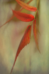 A Touch of Autumn by Annie Snel - van der Klok