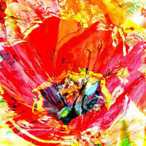 Tulpe im Quadrat von Matthias Rehme