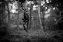 Leaf von Tim Allen