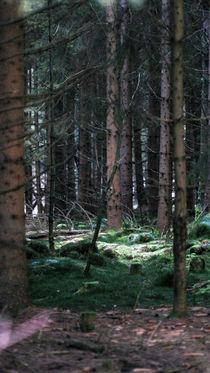 Wald von Jens Berger
