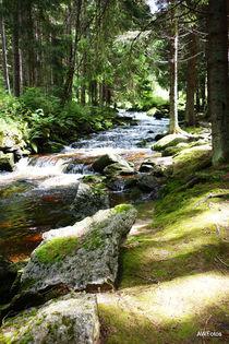 Im Böhmerwald von Angelika Wiedemeyer