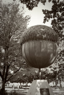 Moore Square Acorn by Jamie Starling