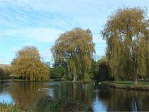 three willows von Martyn Bennett