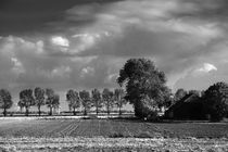 Herbst in Schwarzweiß - Autumn in black and white by ropo13