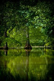 Wasserzypresse  von Thomas Lambart