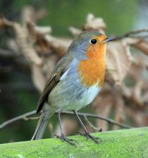 robin on a fence von Martyn Bennett