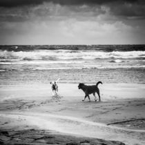 Two dogs playing on the beach von kbhsphoto