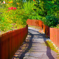 Path between fences by kbhsphoto