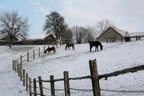 Drei Pferde im Schnee von Margarita Moerth