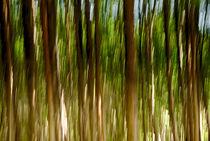 Bewegte Bäume von fraenks