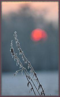 Wintermorgen by Irmtraut Prien