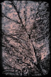 Stone leaf von Lars Hallstrom
