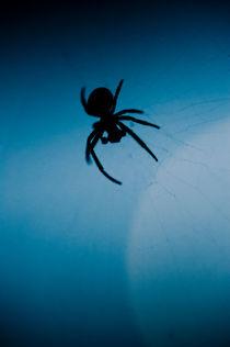 Nocturnal spider von Lars Hallstrom