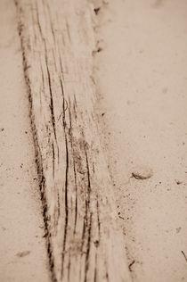 Driftwood by Lars Hallstrom
