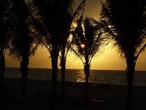 'Sunrise Palms, Playa del Carmen-Mexico' von Tricia Rabanal