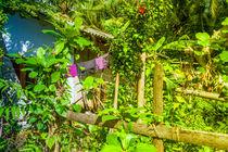 Garten im Dschungel von Gina Koch