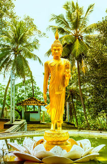 Goldener Buddha auf einer Lotusblüte by Gina Koch