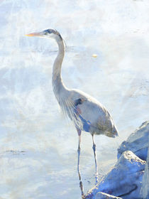 Great Blue Heron von Robert Ball