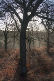 Highlighted Oaks by David Tinsley