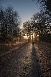 Cycle Path Sunrise von David Tinsley