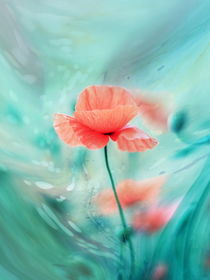 Poppy Dream by syoung-photography