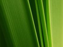 Verde chiaro by Brigitte Deus-Neumann