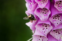 Fingerhut mit Biene von Denise Urban