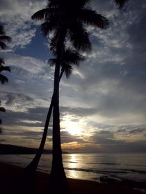 Sunset Palms, Samana by Tricia Rabanal