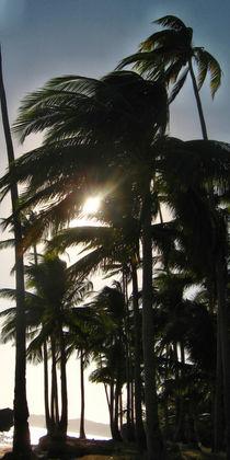 Philippinen - Palmen by lessaksart