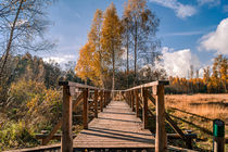 wooden path by Bernhard Rypalla