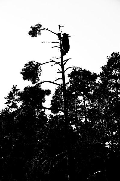Noorwegen-2006-vassfaret-boomberen-2