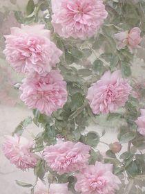 Rosen Blüten von Elke Balzen