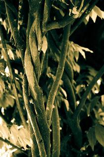 verschlungener Baum by Denise Urban