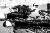 moderndes Holz im Wasser von Denise Urban