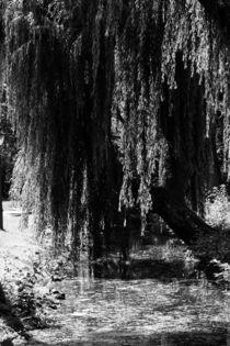 Großer Baum von Denise Urban