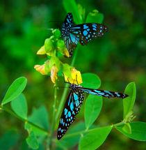 Blaue Schmetterlinge im grünen Garten von Gina Koch
