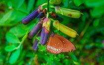 Schmetterling im Garten by Gina Koch
