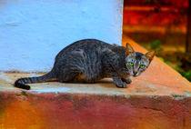 Wachsame Katze in einem Tempel by Gina Koch
