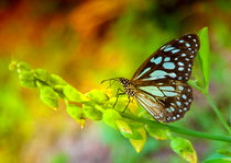 Colors-of-butterfly